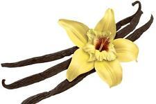 500 VANILLA SEEDS - VANILLA ORCHID - Vanila Planifolia - Free Shipping