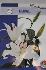 3 Flower bulbs,Lilium Oriental White,Helvetie,Lillie#BZ73