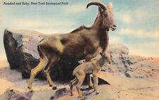 Aoudad and Baby (N African wild sheep) Ny Zoological Park~Vintage Linen Postcard