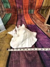 """Large Pink Queen Conch Sea Shell Strombus Lobatus Gigas 9"""" with SLIT"""