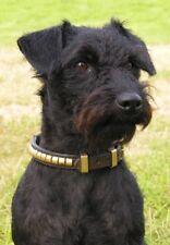 Patterdale Terrier  A6 Blank Card Design No 3 Starprint