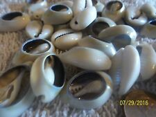 ocean sea shell small Spiral Shell Beads, Cowrie cut ring top lot of 100 <><