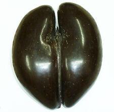 Coco De Mer Seychelles Original Giant 4kg Antique 850mm Double Nut Seed 1850's