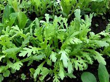 100 Semillas de Chrysanthemum Coronarium (Shungiku)