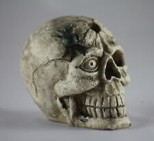 SKULL MODEL with SPIDER, an Unusual, Bizarre, Weird item for GOTHIC LOVERS