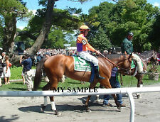 BEHOLDER 8 by 10 PHOTO 2014 Ogden Phipps Horse Race BELMONT PARK Breeders Cup #5