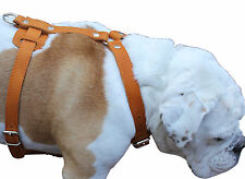"Real Leather Dog Harness 33""-41"" chest size Mastiff Great Dane Saint Bernard"