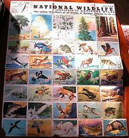1939 National Wildlife Federation Poster Stamp Collection - 80 Stamps