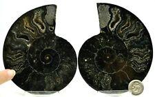 "New ListingRare 1 in 100 Black Pair Ammonite Crystal Lg 106mm Dinosaur Fossil 4.2"" e3125xx"