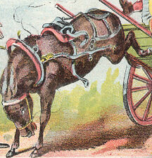Domestic Sewing Machine Trade Card, Mule Kicking Up A Storm, Busy Scene C646