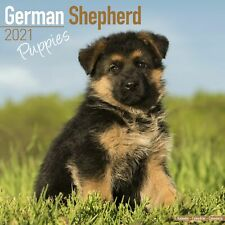 German Shepherd Puppies Calendar 2021 Premium Dog Breed Calendars