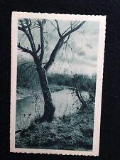 A113 - 1940 alberi Ed. Cecami formato piccolo da Terni