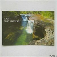 Avant Card #13099 Wilderness Gifts 2008 Postcard (P631)
