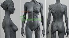 30cm altezza modello anatomici del corpo umano anatomico scultura di agopuntura
