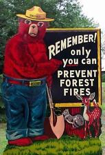 Smokey the Bear # 10 - 8 x 10 Tee Shirt Iron On Transfer