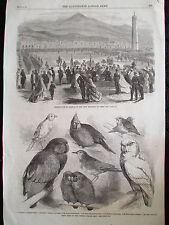 Illustrated London News 3/3/1866 109th Regiment Aden India Prize Birds 16x11