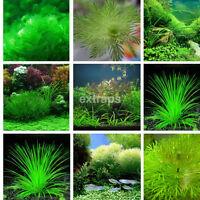 1000x Bulk Aquarium Mixed Water Plant Grass Seeds Aquatic For Fish Tank Decor US