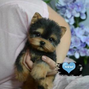 Simulation Pet Dog Realistic Yorkie Dog Puppy Lifelike Stuffed Companion Toy NEW