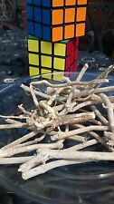 5 grams Silene Capensis Whole Root Undlela Ziimhlophe Dream Herb like Calea