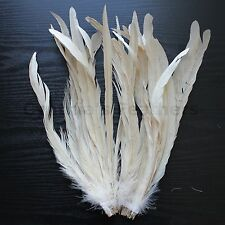 """25 pcs 12-14"""" long Champagne Dyed Rooster COQUE tail Feathers for crafting, NEW"""