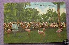 GRACEFUL FLAMINGOES - FLORIDA GARDEN 1941 POSTCARD