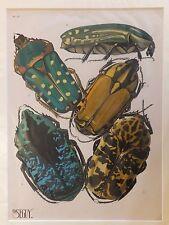 Seguy Série des insectes Planche 12 - 1929
