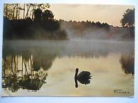 """CPM """"Visage des Landes - Cygne sur un étang au lever du jour"""""""