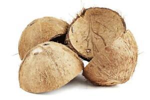 Coconut Shell Coconut Shell Half Coconut Shell for handicraft or pet feeder