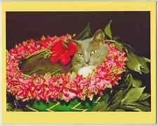 HAWAIIAN CAT IN LEI GICLEE PHOTO MOUNTED ON SINGLE 8X10 INCH BACKING BOARD