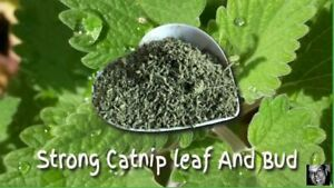 CATNIP - Strong Catnip - Direct From farmer  You Won't Find More Potent!, 2 lb..