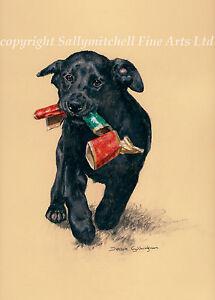 Black Labrador Retriever, Christmas cards pack of 10. C463x Debbie Gillingham