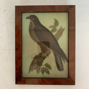 Vintage Framed Reverse Glass Painting Picture Hawk Bird Of Prey
