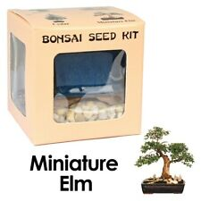 Eve's Miniature Elm Bonsai Seed Kit to Grow Miniature Elm from Seed