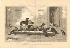 1877 ANTIQUE PRINT - TABLE D'HOTE, HOME FOR LOST DOGS, BATTERSEA