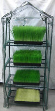 Master Wheatgrass and Sprouts Growing pack~ Green House Kit & 15 lbs seed