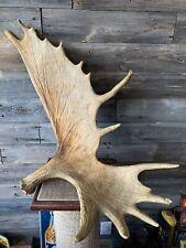 Vintage Moose Antler Shed Manitoba Moose Shed