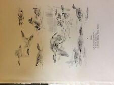 m3e ephemera book plate roland green  birds teal