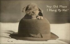 Adorable Puppy Pops Head Through Old Hat c1910 Real Photo Postcard