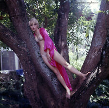 Bunny Yeager 60s Color Camera Transparency Photograph Marcie Lane Nude On Tree