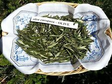 English OLIVE LEAVES dried organic 200+ gr culinary/medicinal/crafts/pot pourri