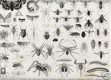 1875= INSETTI RAGNI = Animali = Antica Stampa = Old ENGRAVING