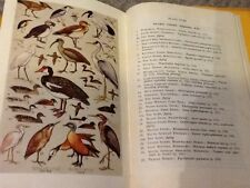 a first guide to South African birds