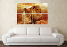 Large Lions Zoo Wildlife Male Pet Africa Safari Wall Poster Art Picture Print