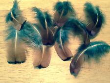 "Pheasant Neck  Feathers Gold 4 Pieces 1""- 2"" Fast Dispatch 1st class option"
