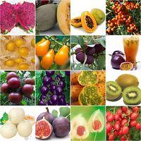 Varity Rare Seeds Heirloom Passion Fruit Sweet melon cherry purple