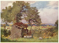 Meadows nr Bishop Auckland  Heaton Cooper vintage print in mount ready to frame