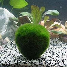 Giant 3-5cm Marimo Moss Ball Cladophora Fish Live Aquarium Plant Aquarium Decor