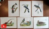 Bird prints c.1855 lot x 6 Ornithology Hitchcock hand colored lithographs