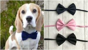 Cute Pet Dog Cat Dickie Bow Tie Smart Collar Accessory Fancy Dress