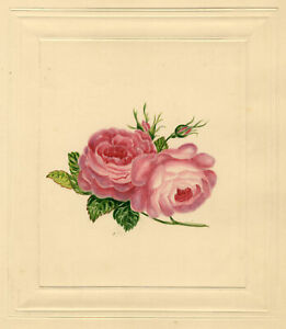 Pink Rose Posy with Buds – Original early 19th-century watercolour painting
